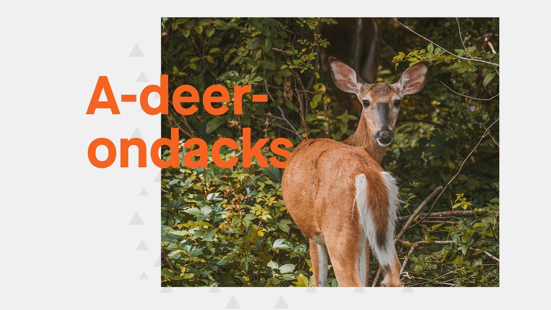 A-deer-ondacks