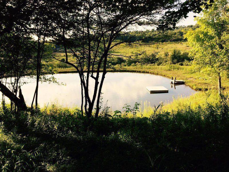 frog_pond.width-800